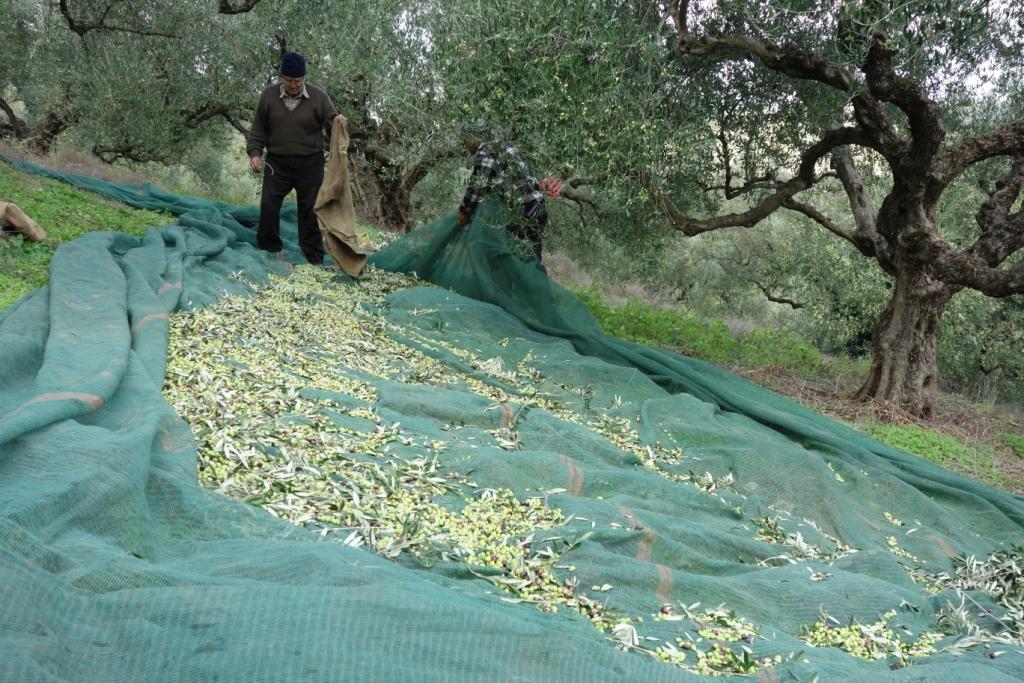 Qualitäts-Oliven